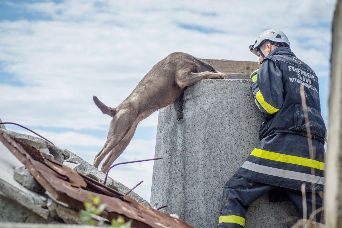 ausrüstung für suchhunde